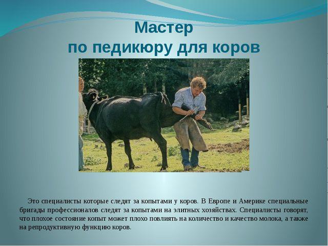 Мастер по педикюру для коров Это специалисты которые следят за копытами у кор...