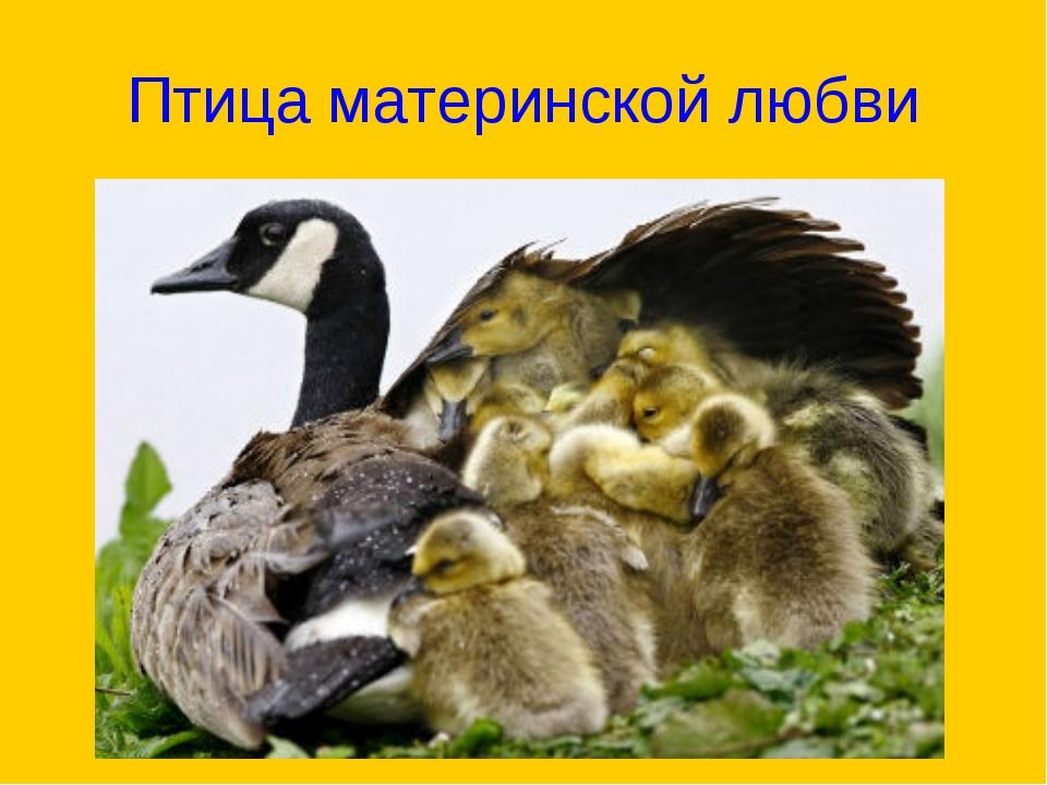 Птица материнской любви