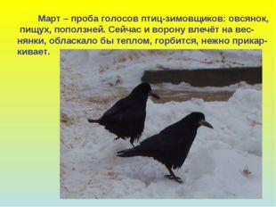Март – проба голосов птиц-зимовщиков: овсянок, пищух, поползней. Сейчас и во