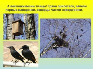 А вестники весны птицы! Грачи прилетели, запели первые жаворонки, скворцы чи