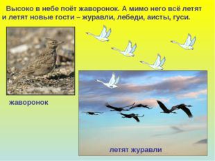 Высоко в небе поёт жаворонок. А мимо него всё летят и летят новые гости – жу