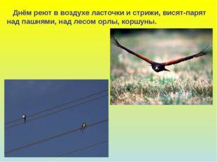 Днём реют в воздухе ласточки и стрижи, висят-парят над пашнями, над лесом ор