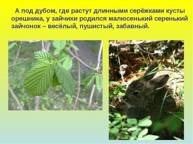 А под дубом, где растут длинными серёжками кусты орешника, у зайчихи родился...