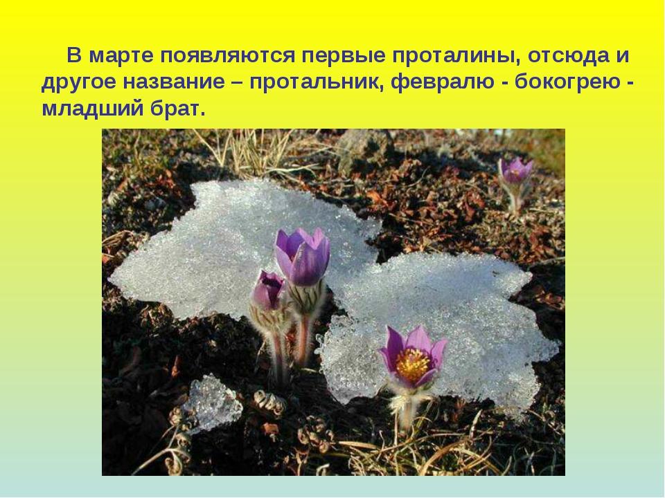 В марте появляются первые проталины, отсюда и другое название – протальник,...