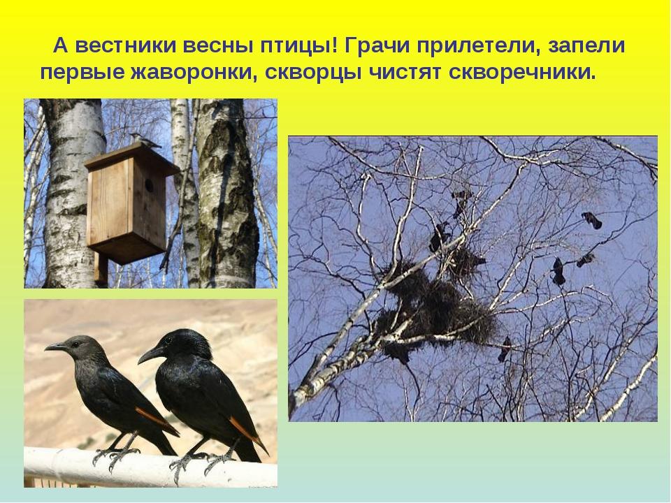 А вестники весны птицы! Грачи прилетели, запели первые жаворонки, скворцы чи...