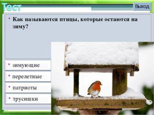 * Как называются птицы, которые остаются на зиму?