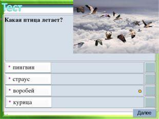 * Какая птица летает?
