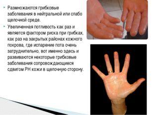 Размножаются грибковые заболевания в нейтральной или слабо щелочной среде. Ув