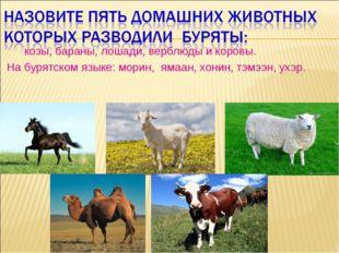 козы, бараны, лошади, верблюды и коровы. На бурятском языке: морин, ямаан, х