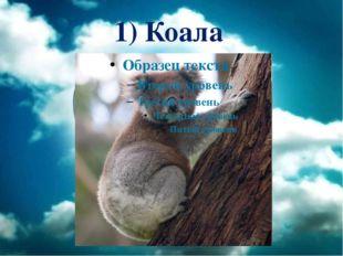 1) Коала