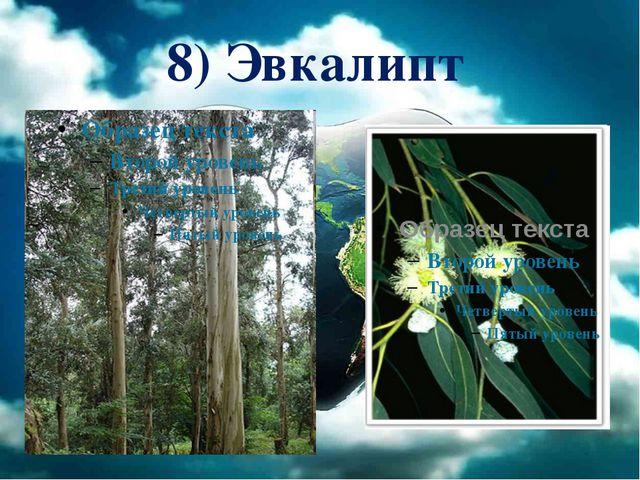 8) Эвкалипт