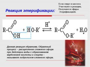 Реакция этерификации: Данная реакция обратима. Обратный процесс – расщепление