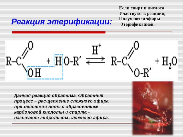 Реакция этерификации: Данная реакция обратима. Обратный процесс – расщепление...