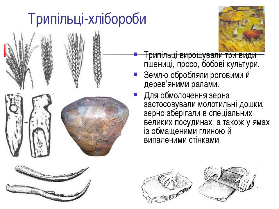 Трипільці-хлібороби Трипільці вирощували три види пшениці, просо, бобові куль...