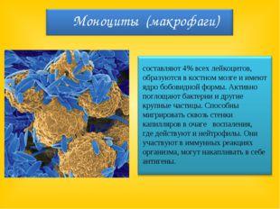 составляют 4% всех лейкоцитов, образуются в костном мозге и имеют ядро бобов