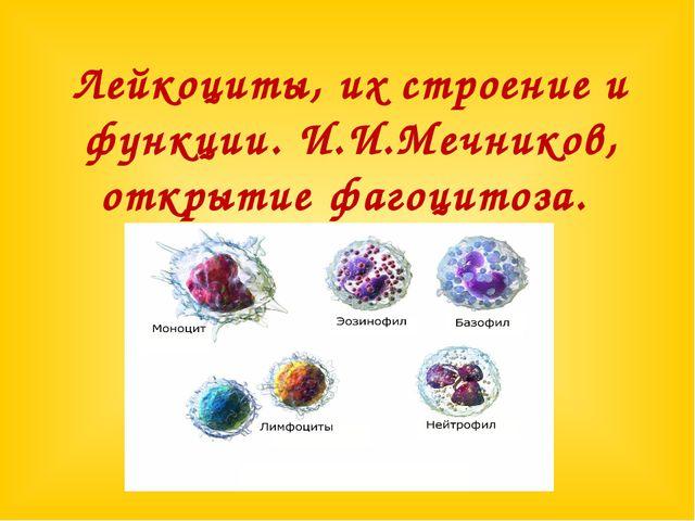 Лейкоциты, их строение и функции. И.И.Мечников, открытие фагоцитоза.