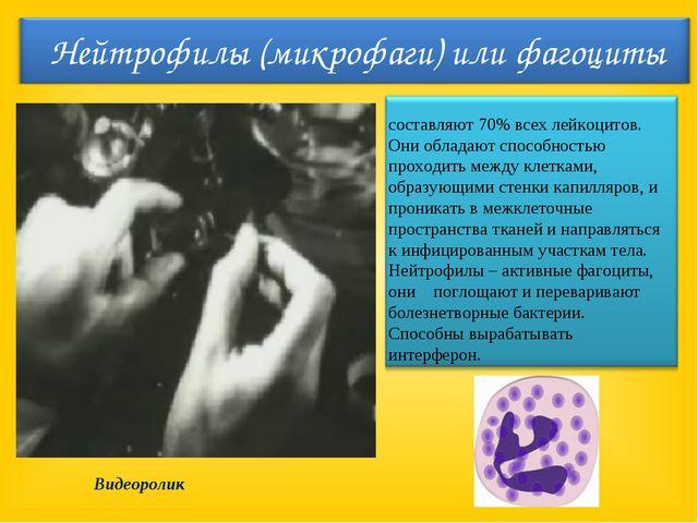 составляют 70% всех лейкоцитов. Они обладают способностью проходить между кле...
