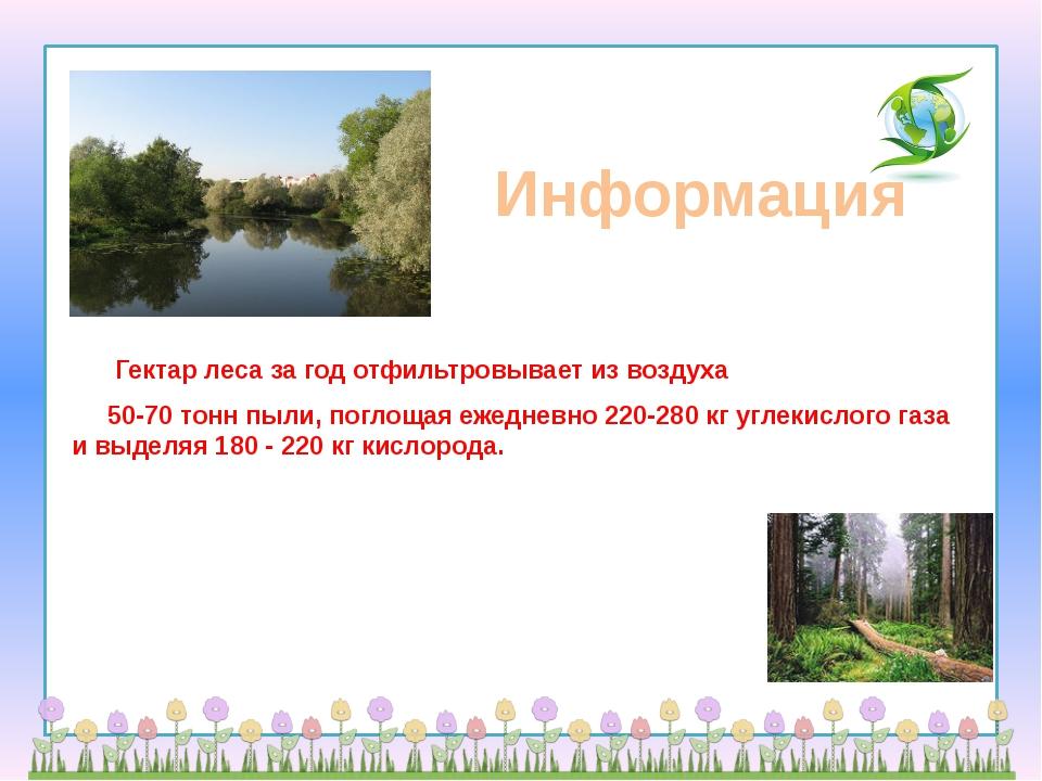 Информация      Гектар леса за год отфильтровывает из воздуха       50-70 т...