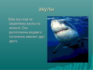 акулы Зубы акул еще не закреплены жестко на челюсти. Они расположены рядами и
