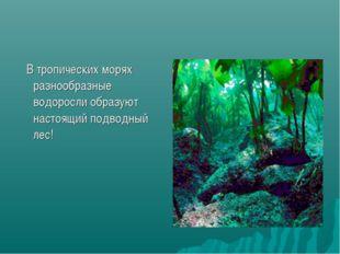В тропических морях разнообразные водоросли образуют настоящий подводный лес!