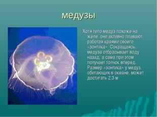 медузы Хотя тело медуз похоже на желе, они активно плавают, работая краями св