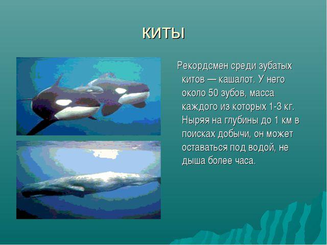 киты Рекордсмен среди зубатых китов — кашалот. У него около 50 зубов, масса к...