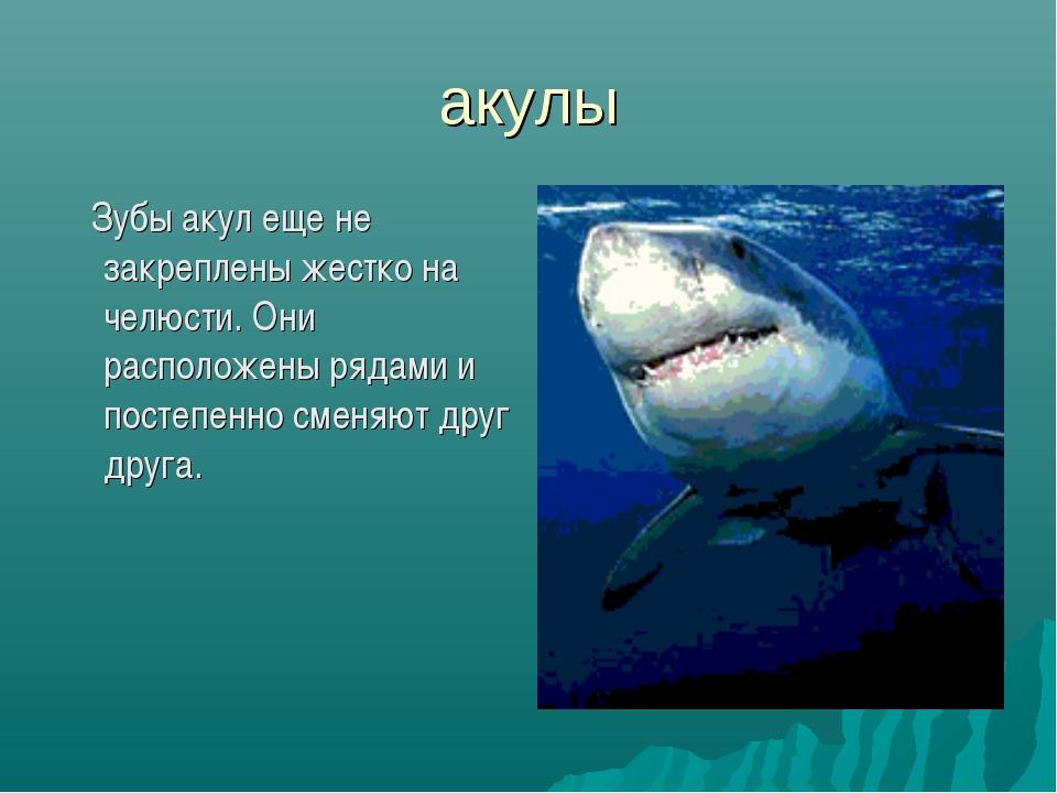 акулы Зубы акул еще не закреплены жестко на челюсти. Они расположены рядами и...