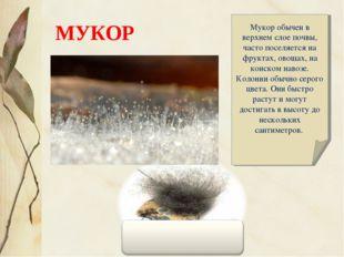 Мукор обычен в верхнем слое почвы, часто поселяется на фруктах, овощах, на ко