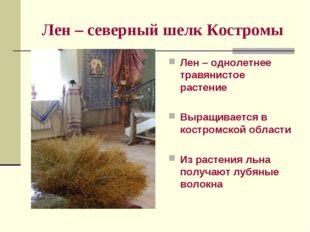 Лен – северный шелк Костромы Лен – однолетнее травянистое растение Выращивает