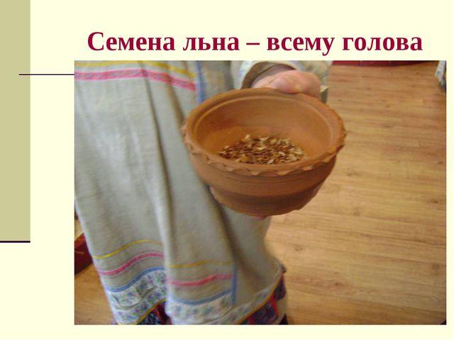 Семена льна – всему голова