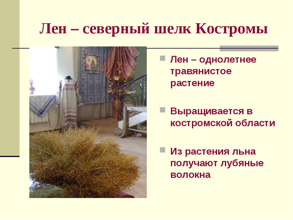 Лен – северный шелк Костромы Лен – однолетнее травянистое растение Выращивает...