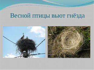 Весной птицы вьют гнёзда