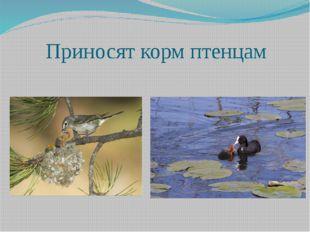 Приносят корм птенцам