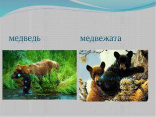 медведь медвежата