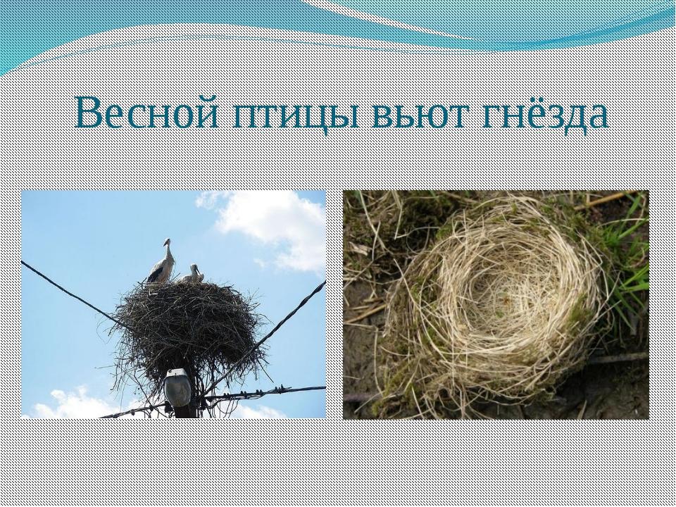 Птицы и их гнезда презентация