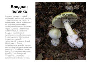 """Бледная поганка Бледная поганка — самый страшный гриб-злодей: никакая """"скорая"""
