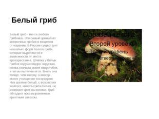 Белый гриб Белый гриб - мечта любого грибника. Это самый ценный из шляпочных