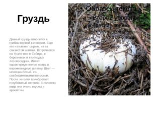 Груздь Данный груздь относится к грибам первой категории. Еще его называют сы