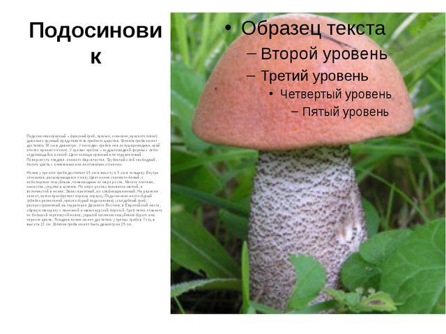 Подосиновик Подосиновик красный – (красный гриб, красюк, осиновик, красноголо...