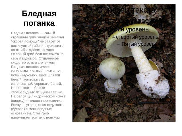 """Бледная поганка Бледная поганка — самый страшный гриб-злодей: никакая """"скорая..."""
