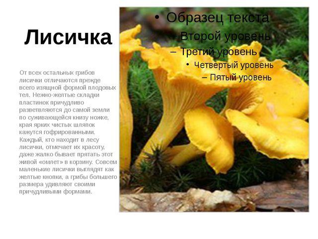 Лисичка От всех остальных грибов лисички отличаются прежде всего изящной форм...