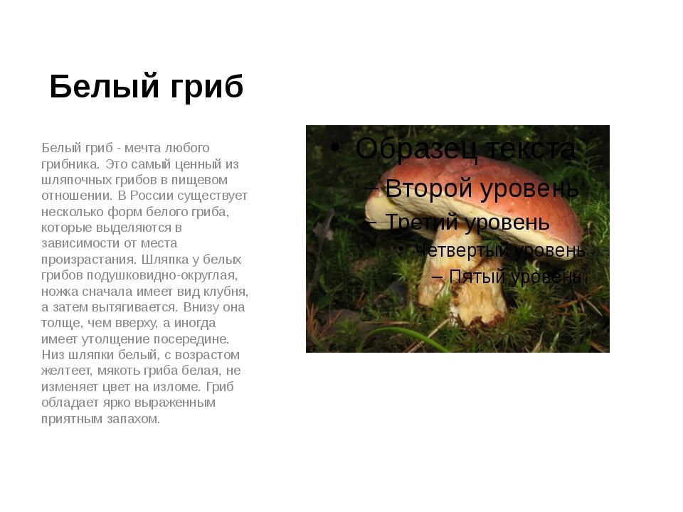 Белый гриб Белый гриб - мечта любого грибника. Это самый ценный из шляпочных...