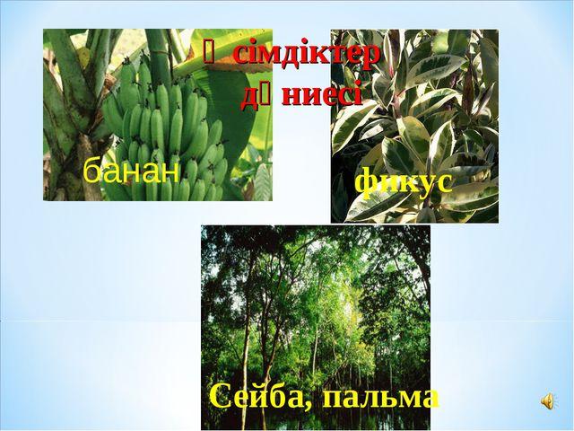 банан фикус Сейба, пальма Өсімдіктер дүниесі