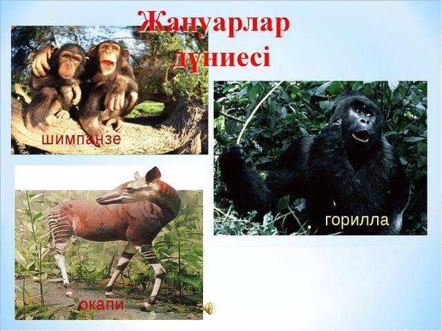 шимпанзе окапи горилла