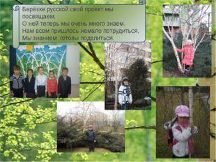 Красавицей русских лесов называют люди берёзу. Стройная, с тонкими, длинными