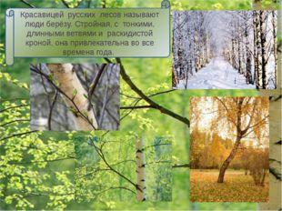 Берёза неразрывно связана с историей славянских народов. В глубокой древности