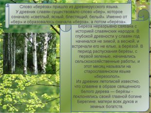 Берёза - единственное в мире дерево с белой корой. Объясняется это «чудо» тем