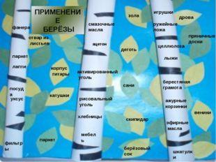 Мы смогли выяснить, почему берёзу называют символом России: у славян – священ