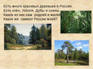 Есть много красивых деревьев в России. Есть клён, тополя. Дубы и осины. Какое