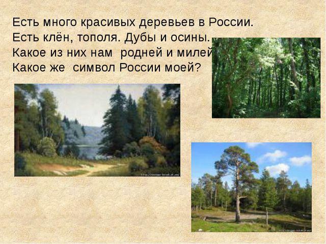 Есть много красивых деревьев в России. Есть клён, тополя. Дубы и осины. Какое...